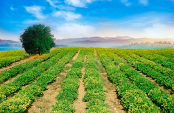 Portaria Interministerial: inclusão de agricultores no Programa Minha Casa Minha Vida Rural