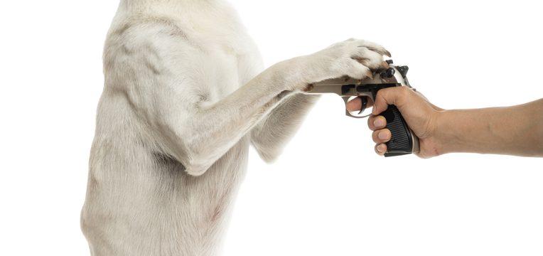 crimes contra animais