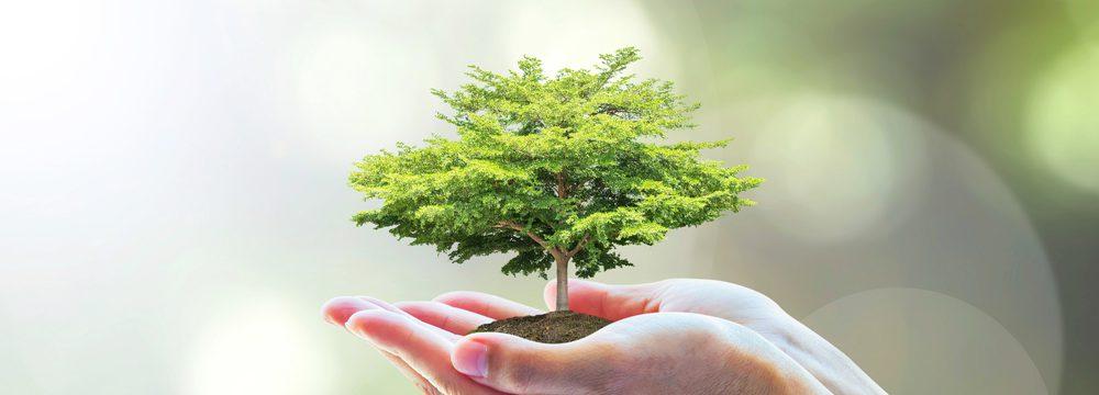Conheça os tipos de Crimes Ambientais