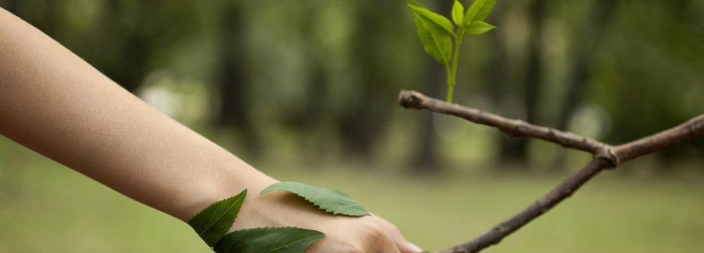 Saiba Quais são os Documentos Necessários para a Licença Ambiental