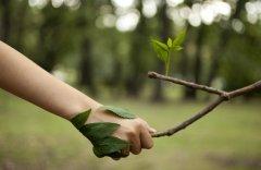 Veja quais são os documentos necessários para a licença ambiental