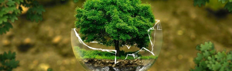 Conheça Todas as Etapas do Licenciamento Ambiental!
