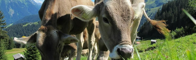Sua Contabilidade Rural Está Errada! Descubra o porquê